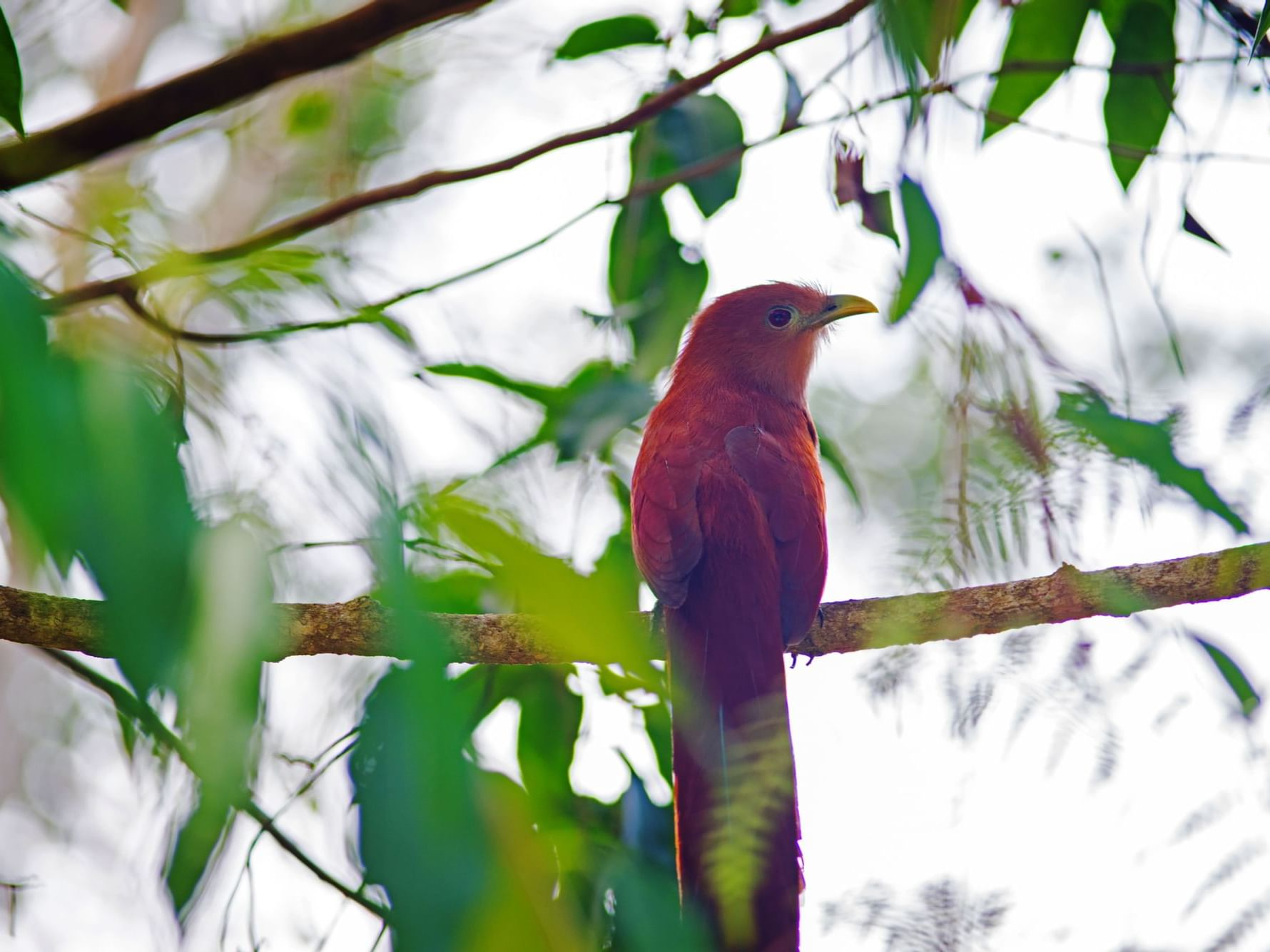 A bird in a branch in the Chetumal - Kohunlich city