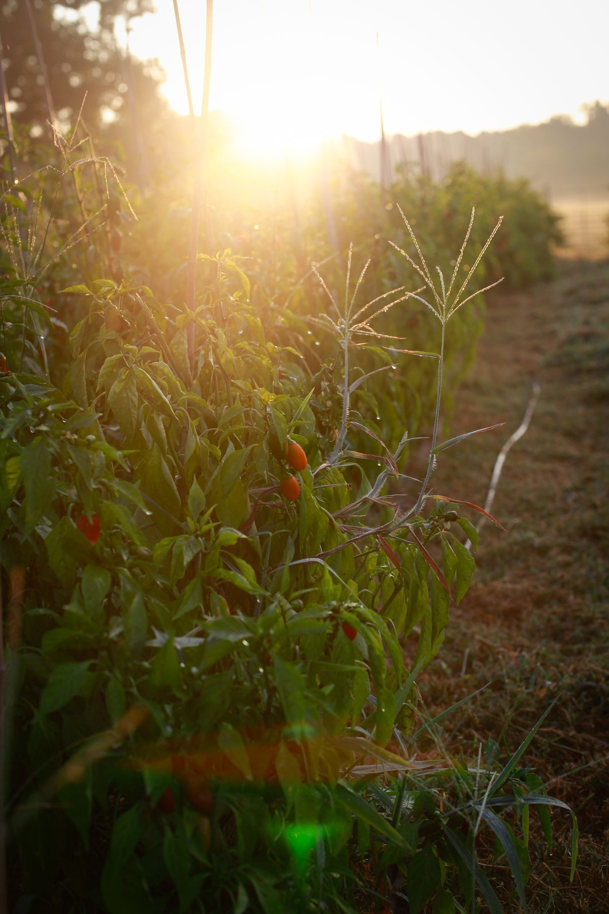 farmland with produce