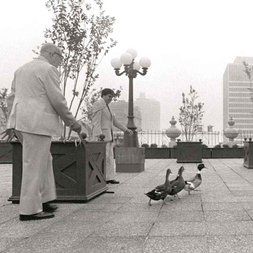1981 image of Peabody Ducks at Peabody Hotels & Resorts