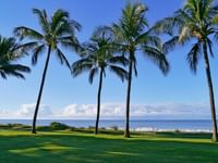 palm trees located on the property of Waimea Plantation Cottages