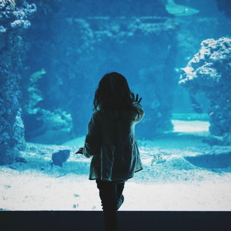 Dallas World Aquarium - WARWICK CORPORATE