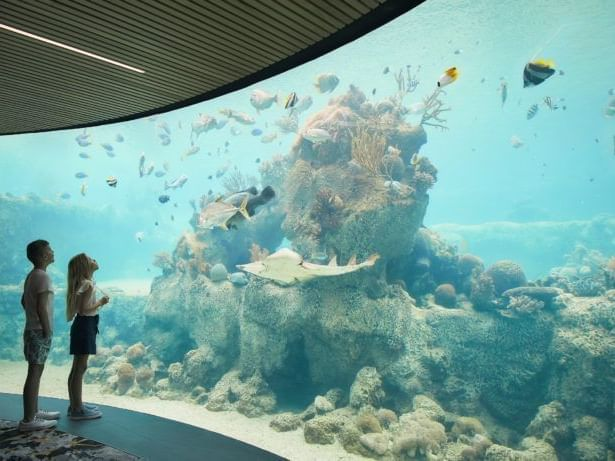Two kids in Underwater Observatory at Daydream Island Resort