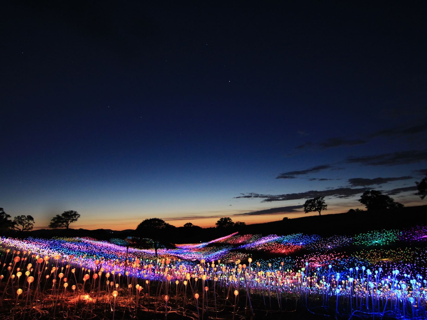 Field of Lights at Sensorio