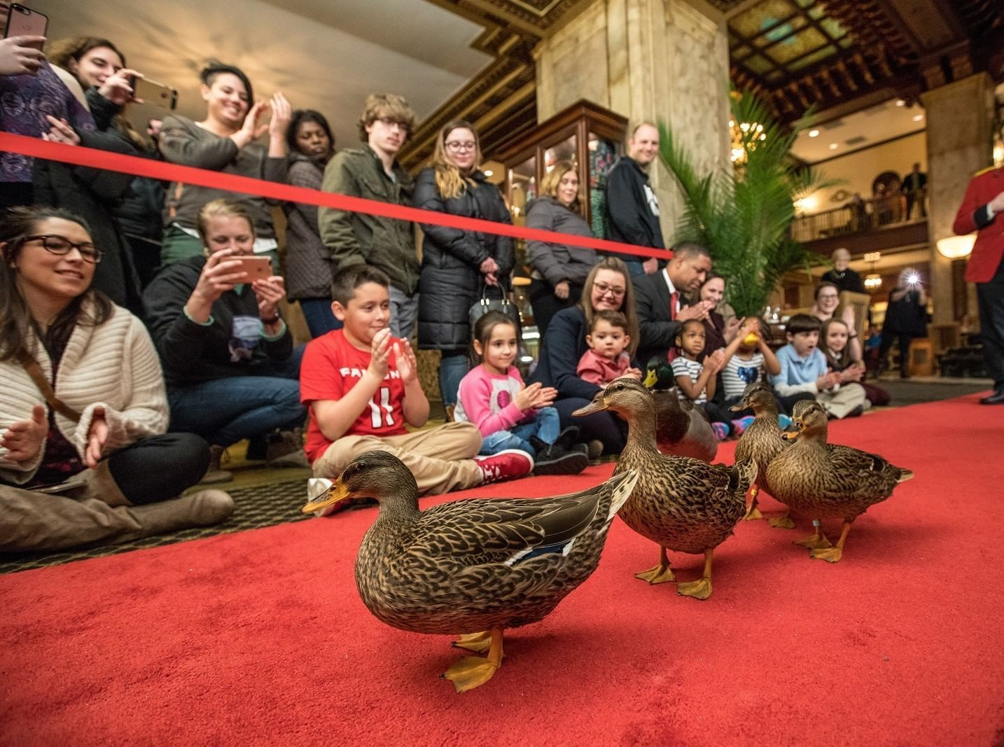 The Peabody Ducks - Duckmarch