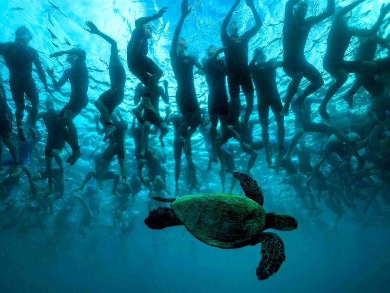 A turtle in deep sea with many people near The Reef Resorts
