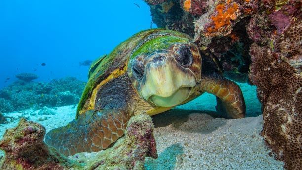 Top 5 Tips for Photographers visiting Heron Island