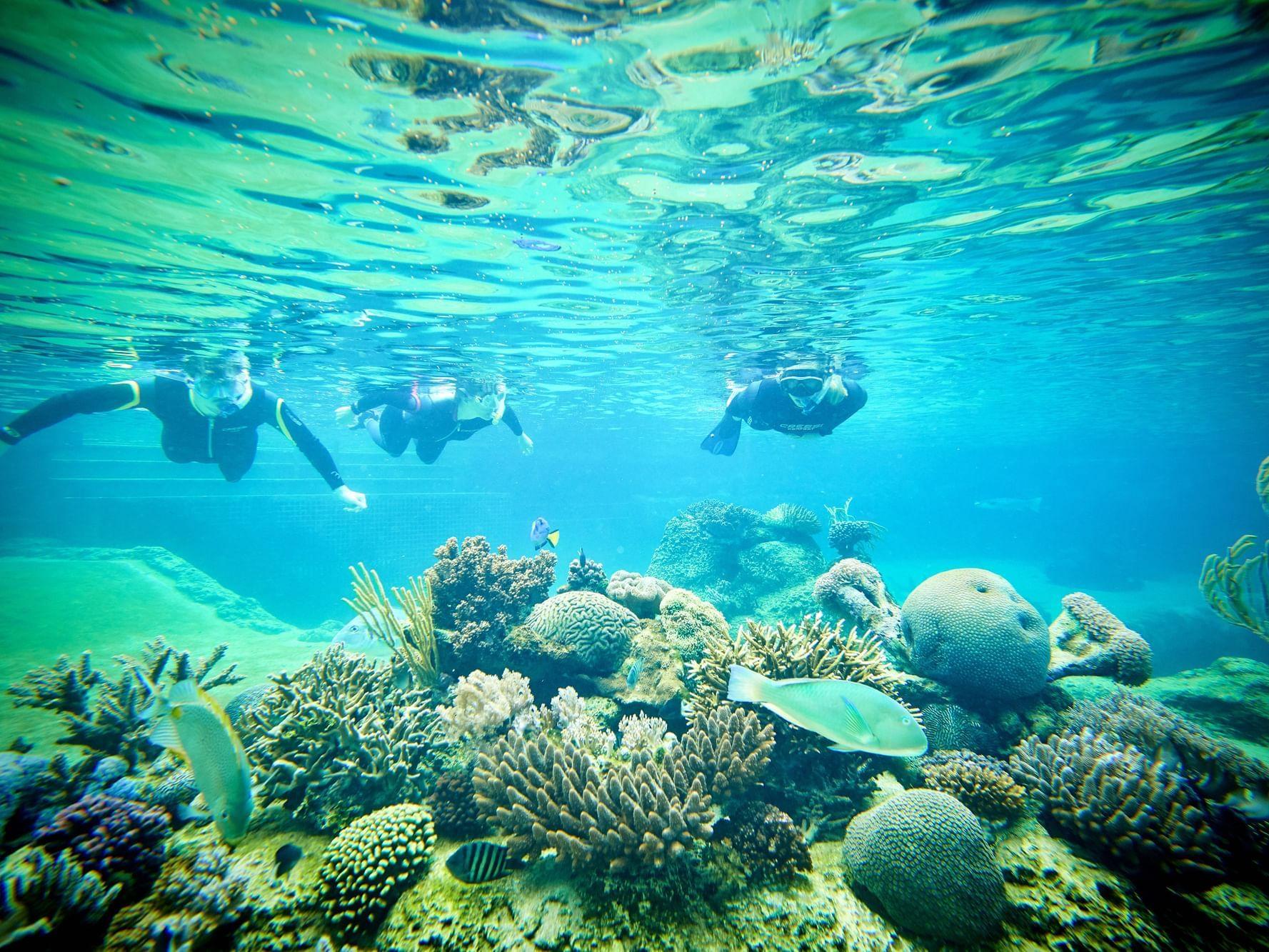 Guests snorkeling in deep sea near Daydream Island Resort
