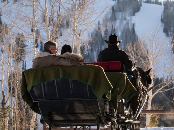 Winter Horse Drawn Sleigh Ride