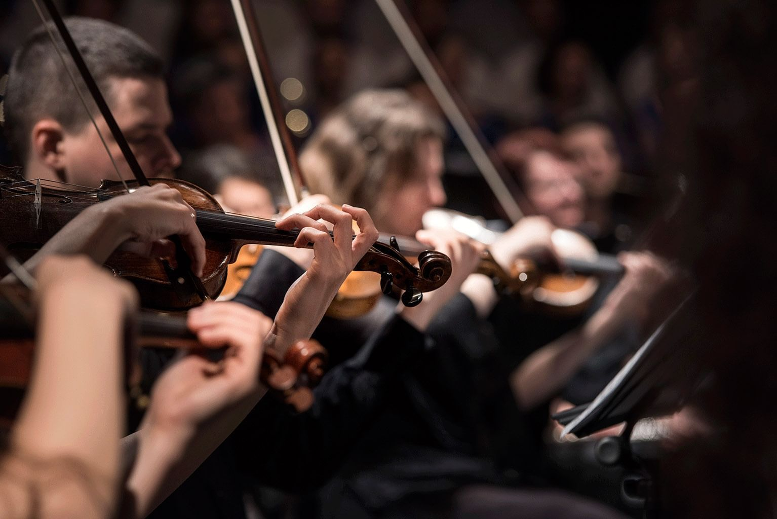 row of violinists