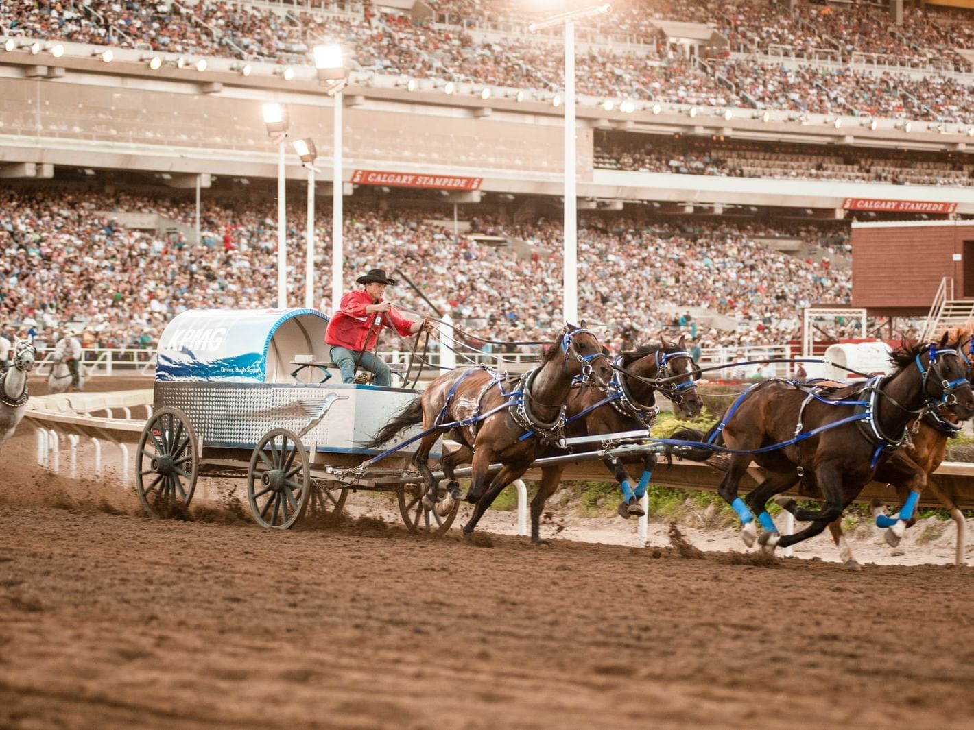 Horse carriage racing at Calgary Stampede