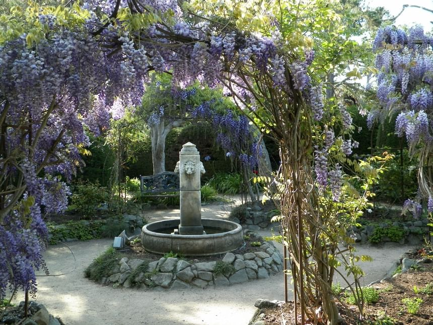Garden with purple flower overhang and fountain