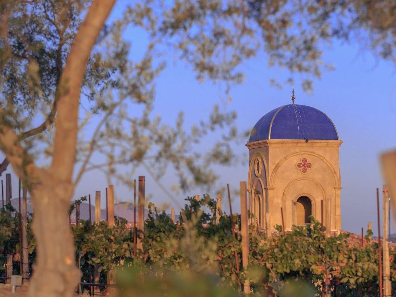 Allegretto vineyard vines and tree