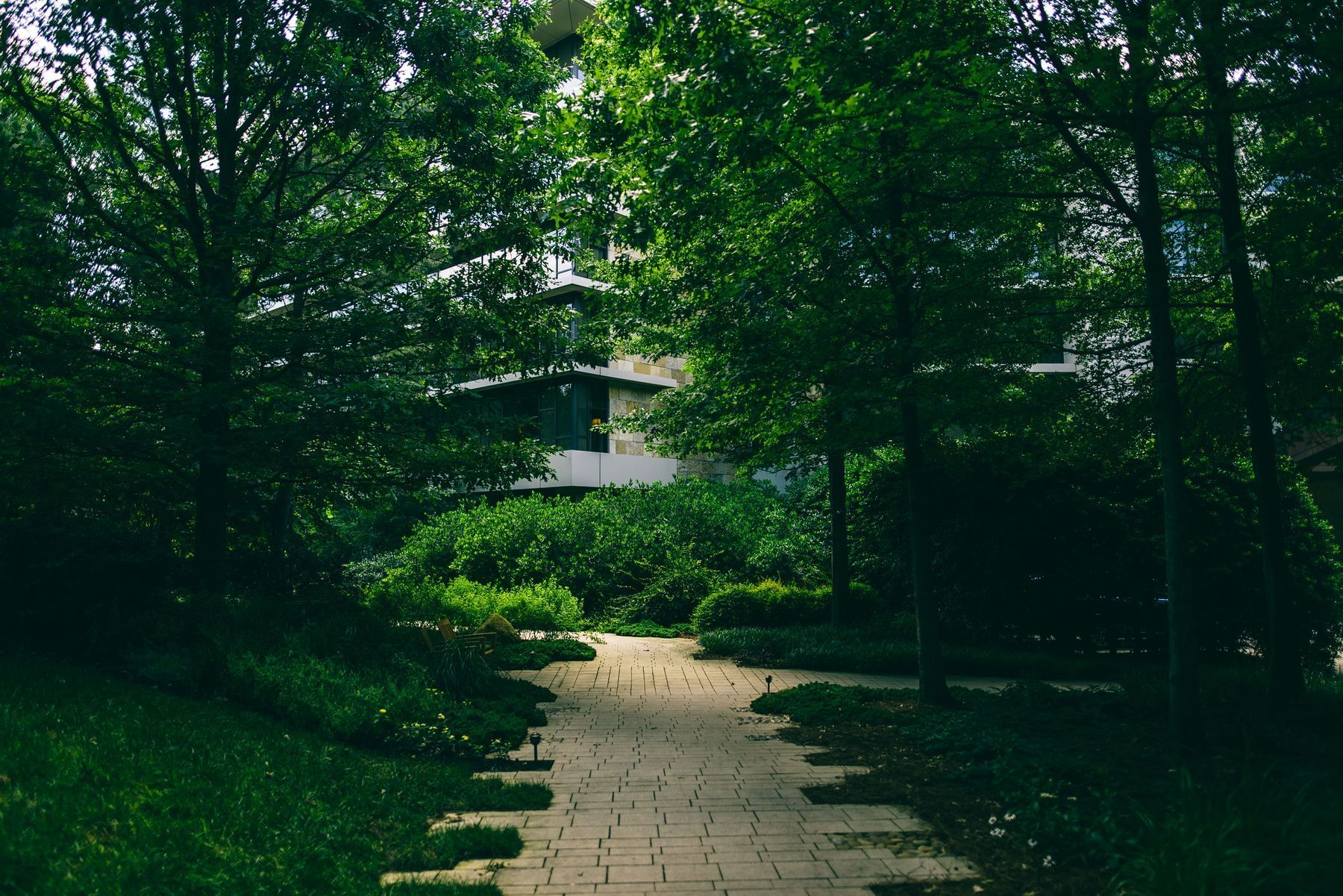 sidewalk path with trees