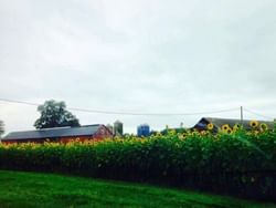 The Pickin' Patch farms near  Avon Old Farms Hotel