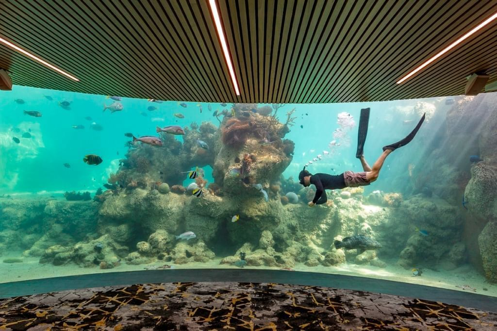 Person diving and exploring corals at Daydream Island Resort