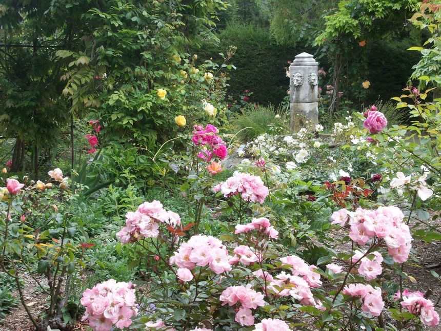Garden with pink flowers