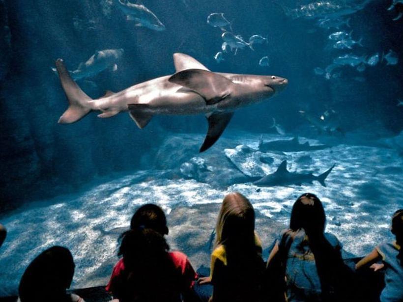 Virginia Aquarium & Marine Science Center at Virginia Beach