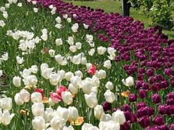 Norfolk Botanical Garden at Virginia Beach