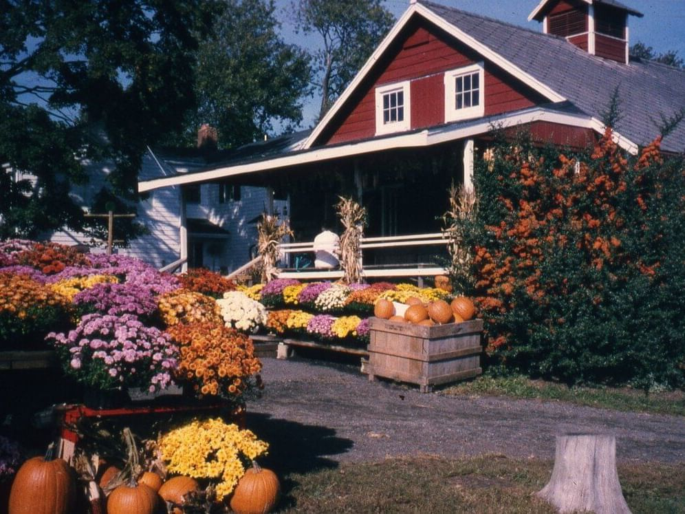 flowers and pumpkins in front of red building