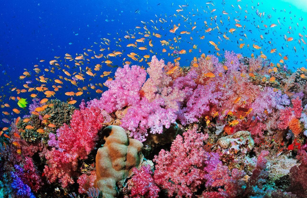View of colorful corals in sea near Daydream Island Resort
