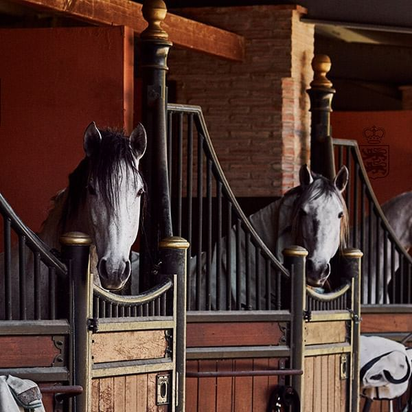 Horses in a large stable