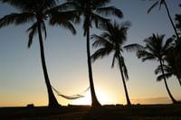 Hammock tied to palm trees at Waimea Plantation Cottages