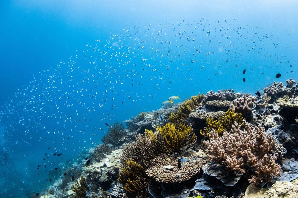 Coral near Heron Island Resort in Queensland, Australia