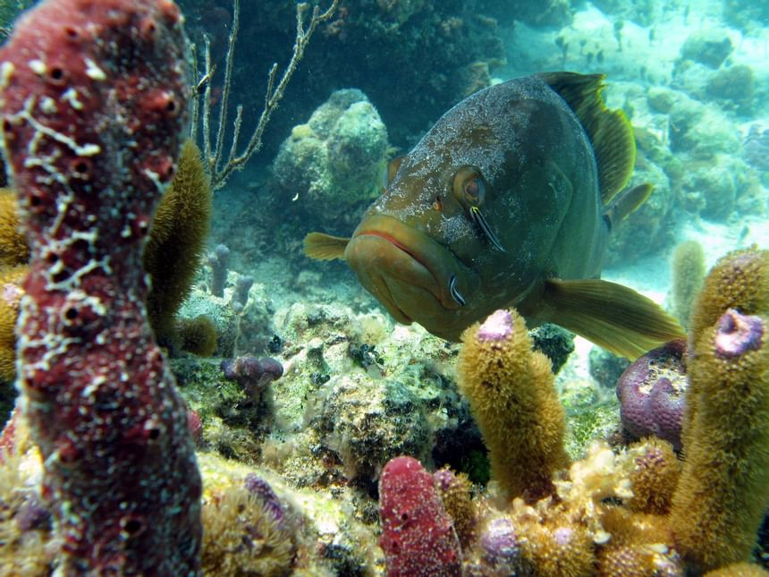 Blue and green fish and corals in sea near Windsong Resort On The Reef