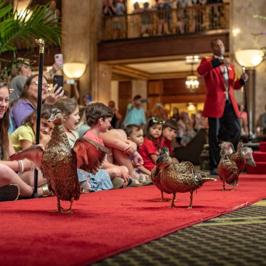 2021 image of Peabody Ducks at Peabody Hotels & Resorts