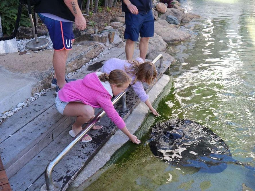 Kids feeding fish at Daydream Island Resort