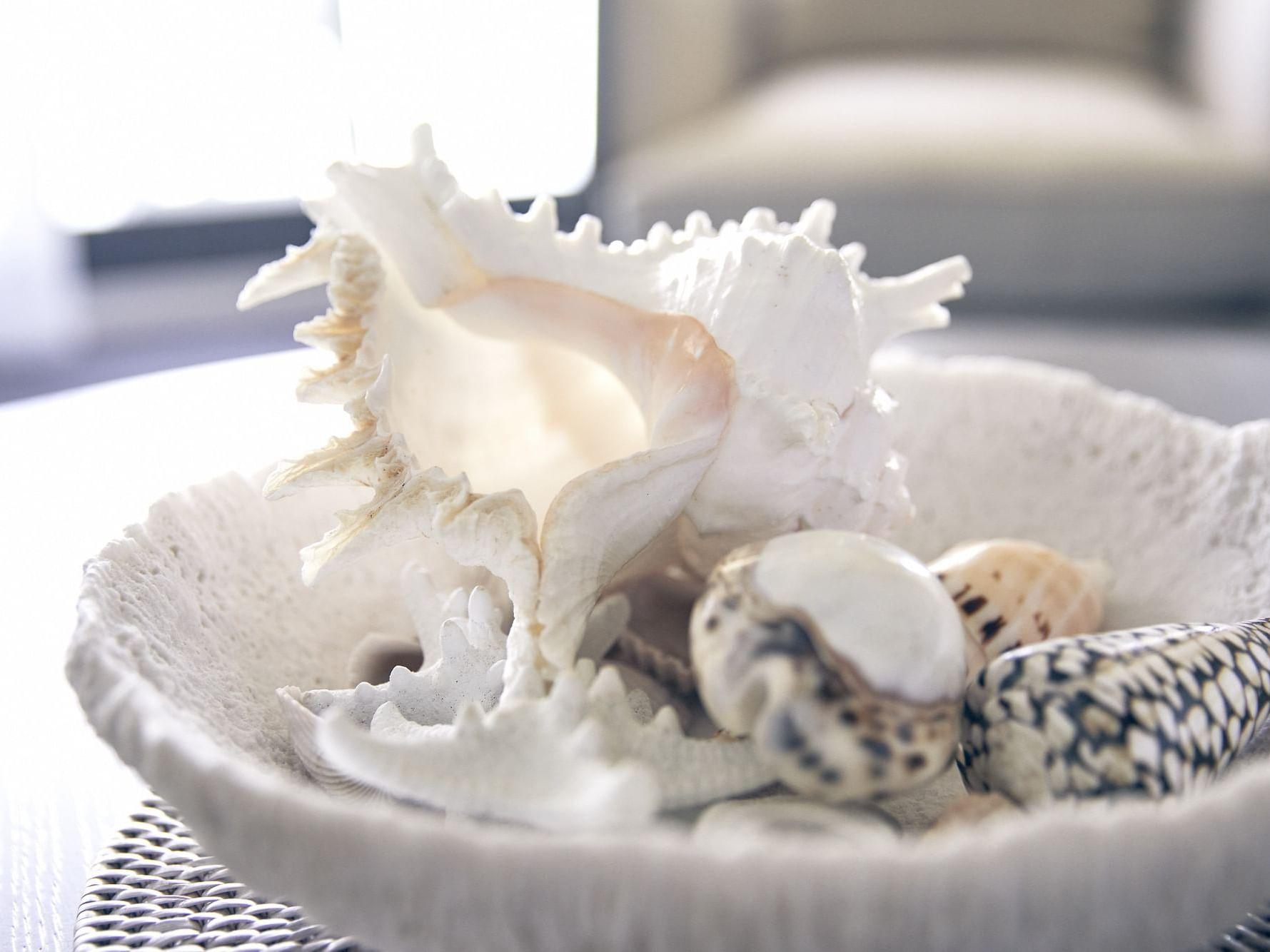 Sea shells in Serenity room at Daydream Island Resort