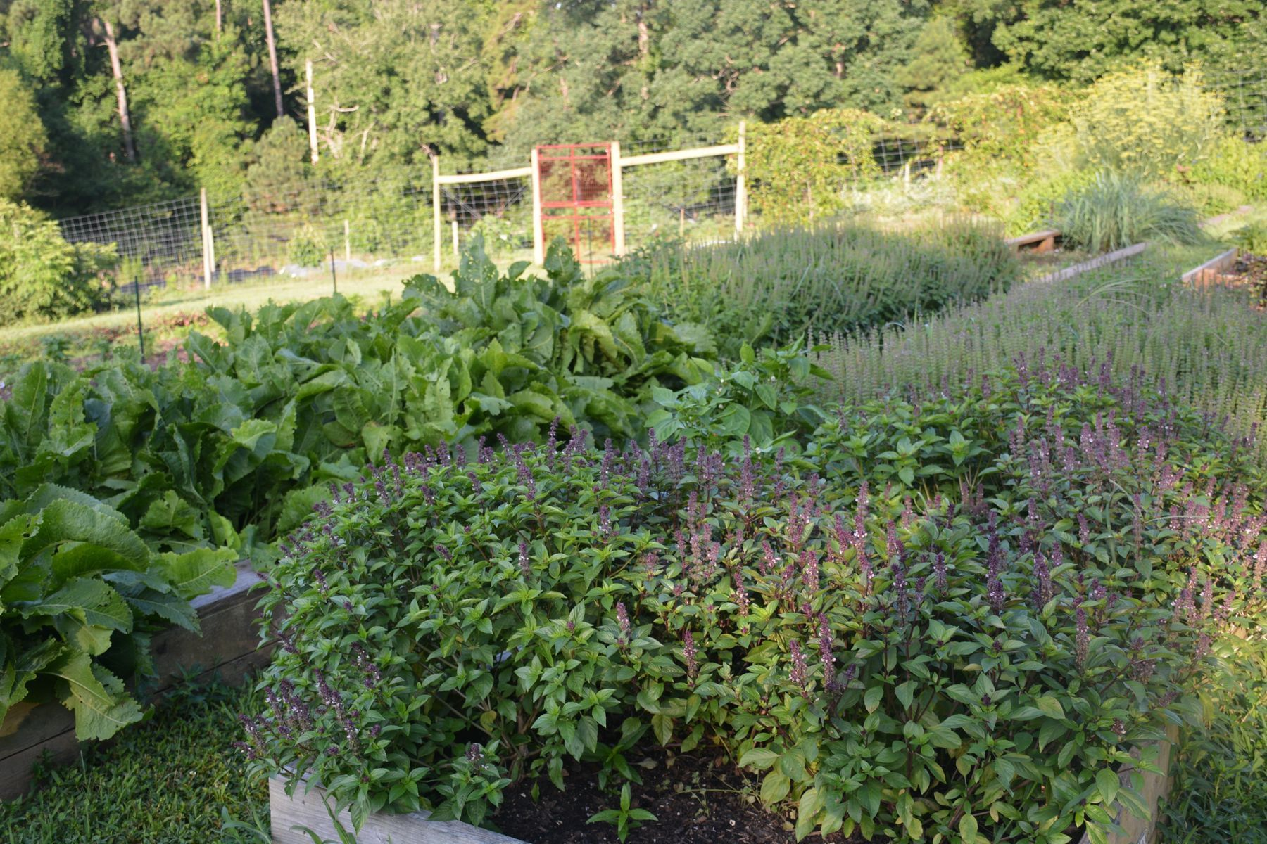 vegetables and flowers in farm