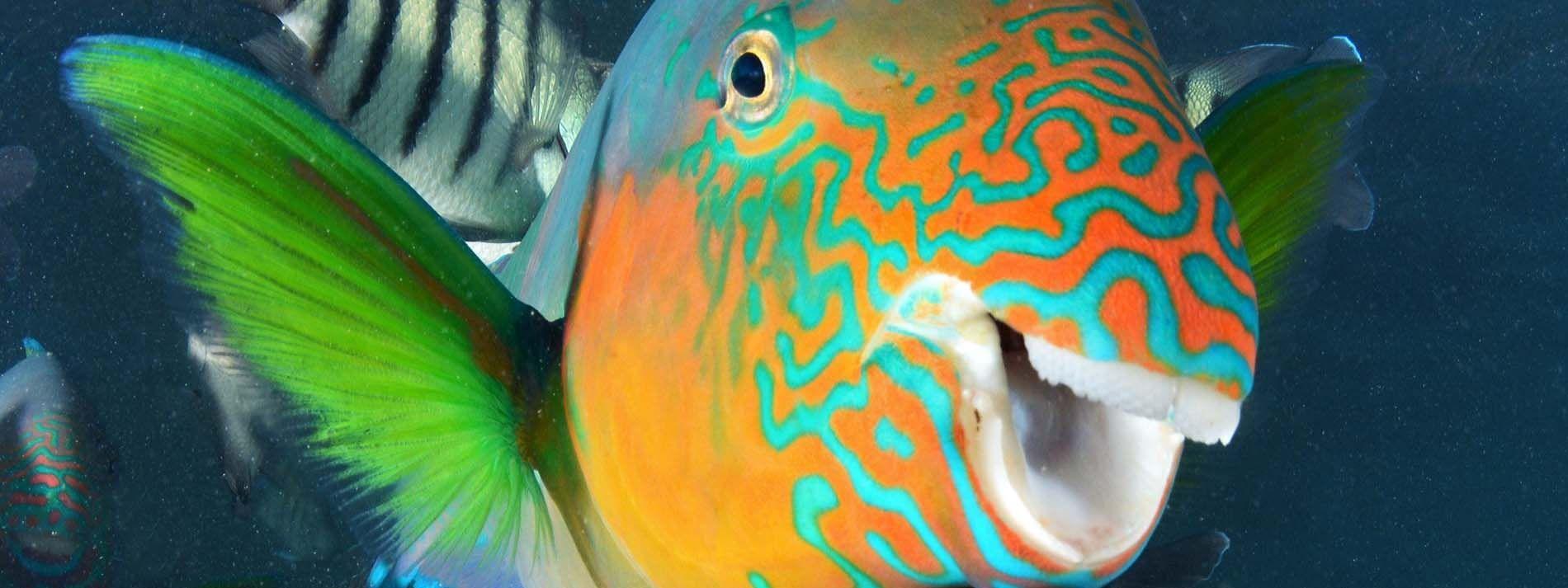 Closeup view of fish at Reef Aquarium in Daydream Island Resort