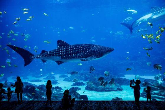 A beautiful aquarium near Precise House Düsseldorf Airport