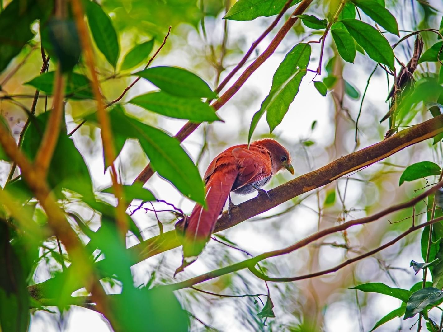 Bird on a branch in the Chetumal - Kohunlich city