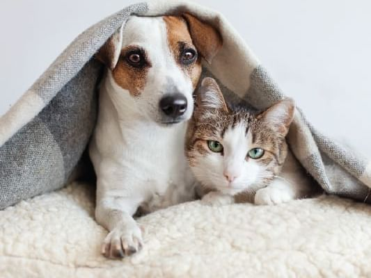 Cat and dog were covered in a blanket at Dream Thailand Bangkok