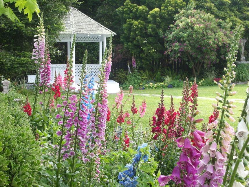 Flowers in the Gazebo Garden