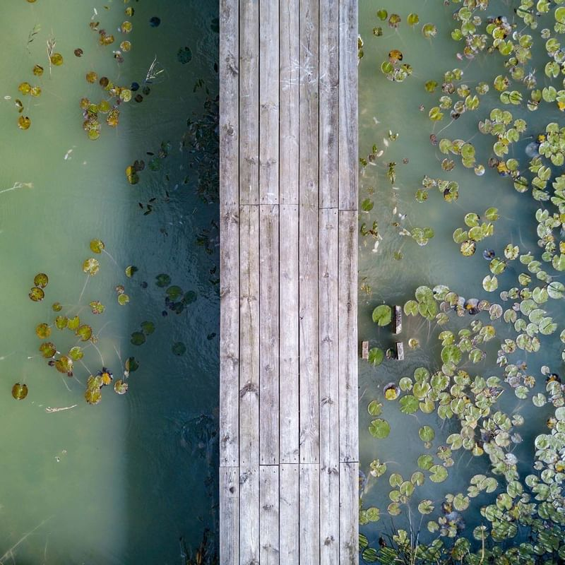 Top down drone shot of a bridge over a patch of water lilies at Sunway Resort Hotel and Spa