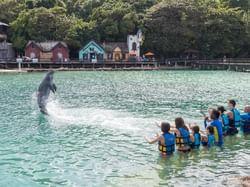 A Dolphin show in dolphin cove near Holiday Inn Montego Bay