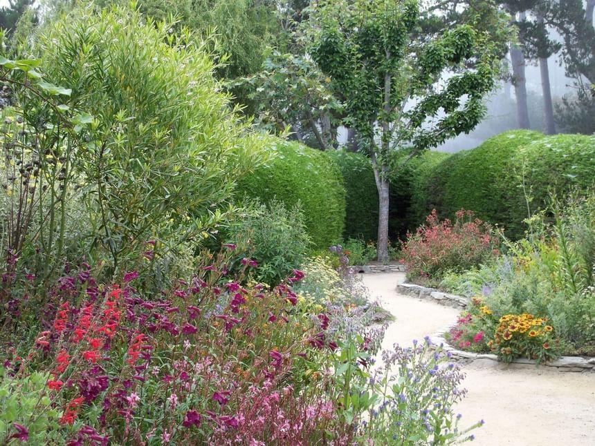Garden with walking path