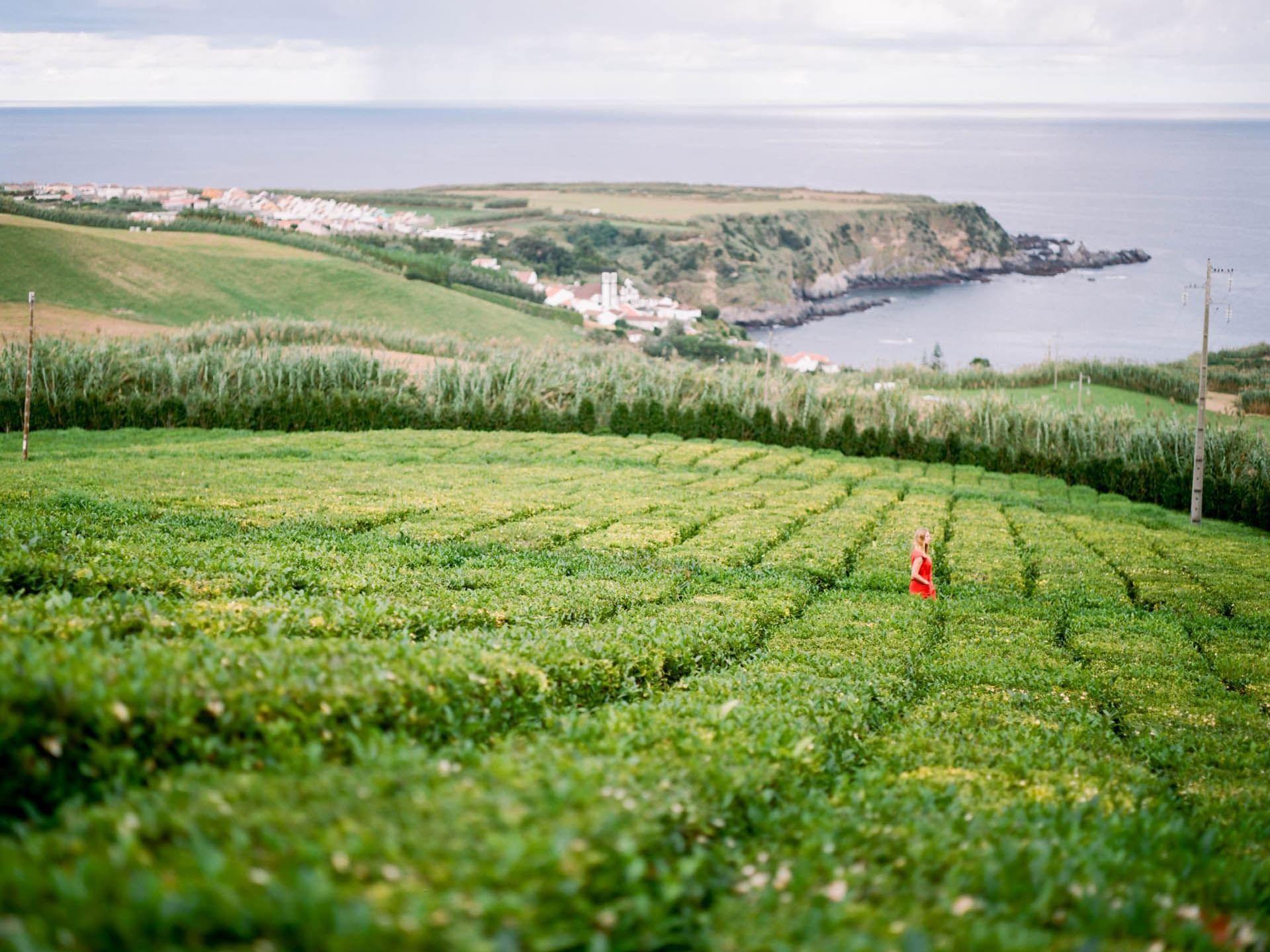 Gorreana Tea Plantations