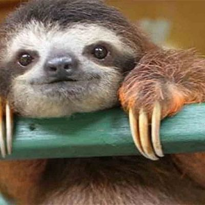 a sloth with its hands resting on a piece of wood