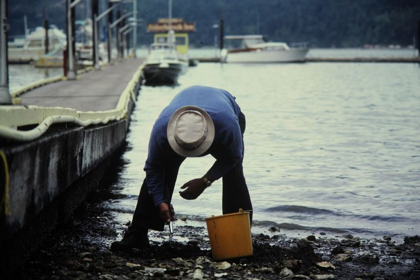 An old picture of a man collecting oysters at Alderbrook
