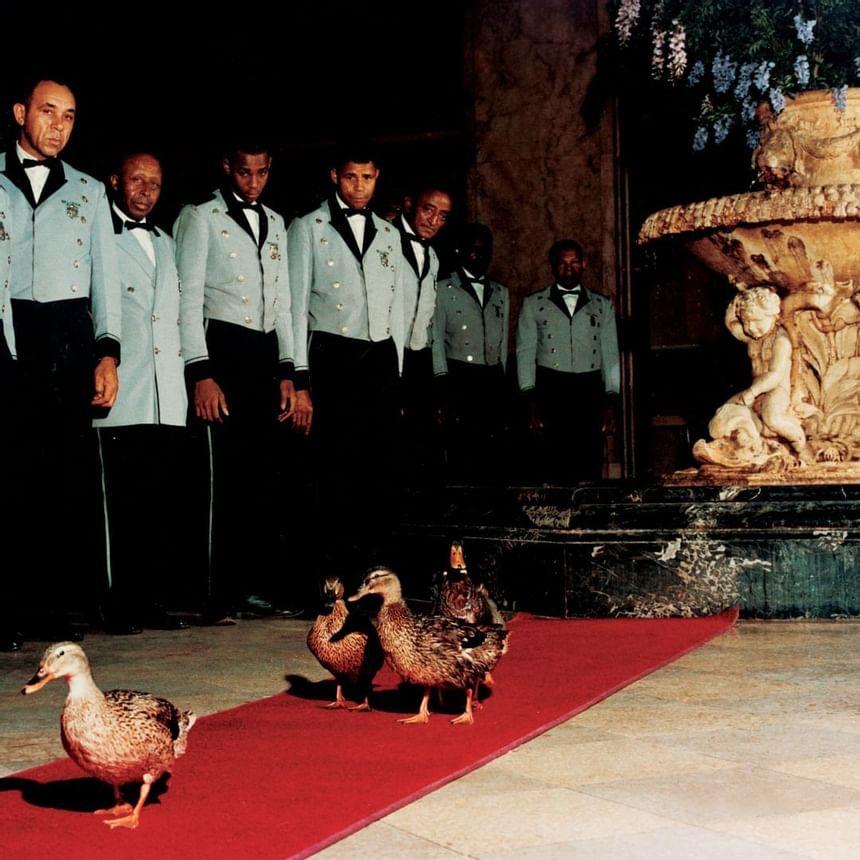 1960 image of Peabody Ducks at Peabody Hotels & Resorts