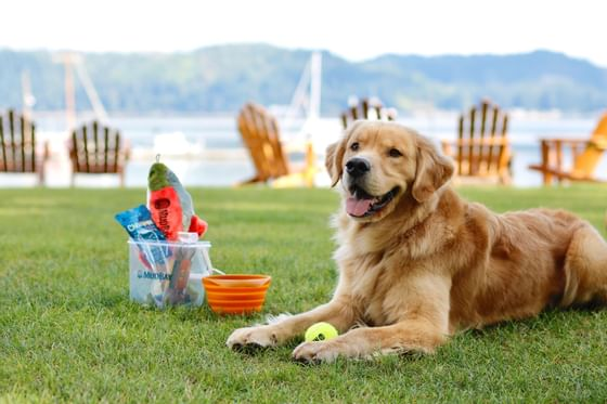 A dog with Water and Food Bowls at the Alderbrook Resort