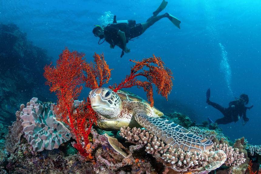 Diving near Heron Island Resort in Queensland, Australia