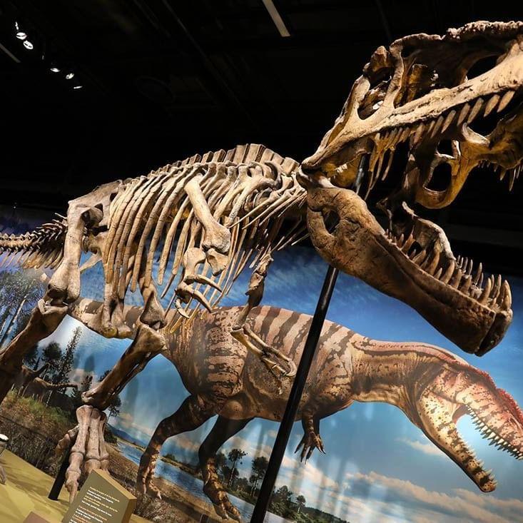 Denver Museum of Nature & Science - WARWICK CORPORATE