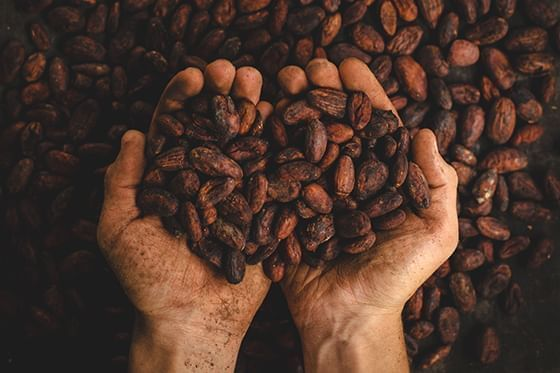 An image of a hand full of coffee at Hotel Sumaq