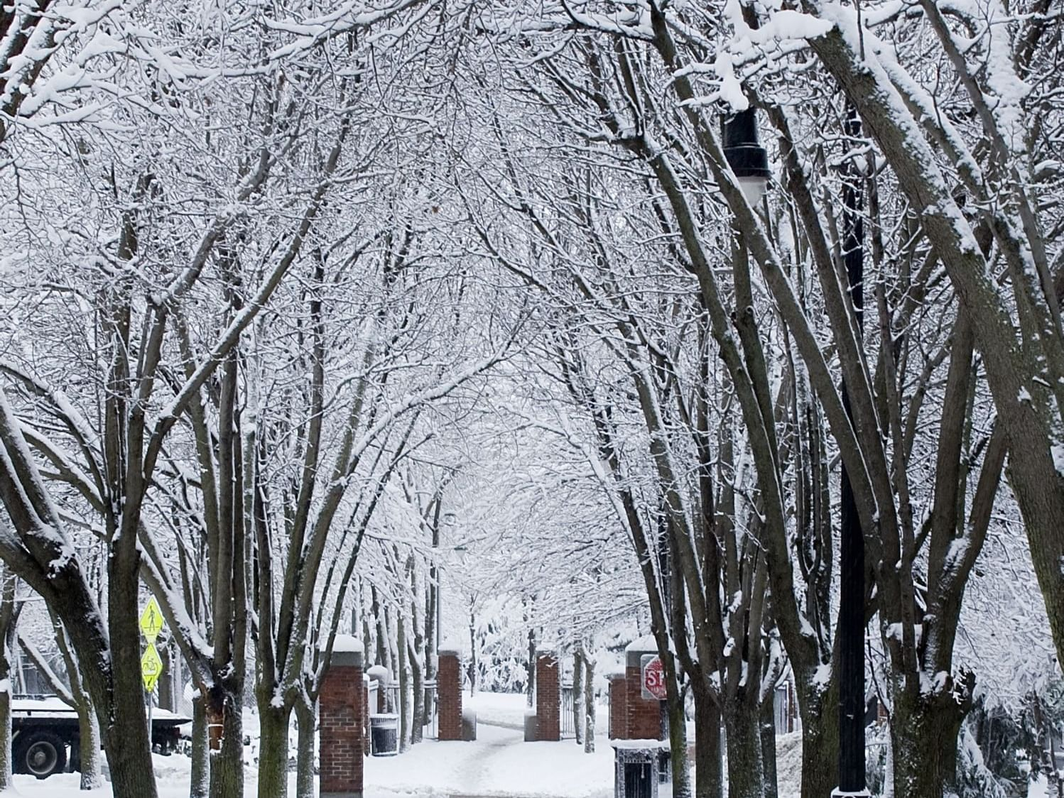 snowy scene with trees and a cleared path