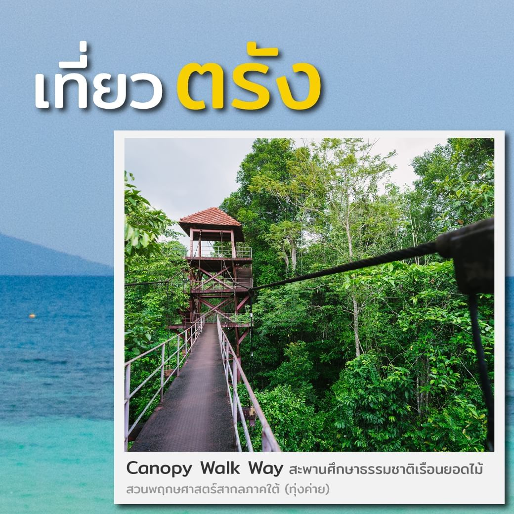 Canopy Walkway at Trang - HOP INN HOTEL